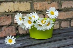 Ανθοδέσμη των chamomile λουλουδιών Στοκ φωτογραφία με δικαίωμα ελεύθερης χρήσης
