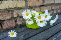 Ανθοδέσμη των chamomile λουλουδιών Στοκ φωτογραφίες με δικαίωμα ελεύθερης χρήσης