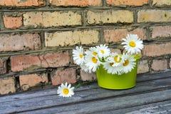 Ανθοδέσμη των chamomile λουλουδιών Στοκ Εικόνα