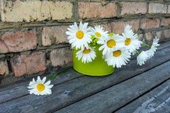 Ανθοδέσμη των chamomile λουλουδιών Στοκ Φωτογραφίες