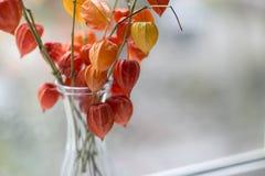 Ανθοδέσμη των physalis στο παράθυρο Στοκ εικόνα με δικαίωμα ελεύθερης χρήσης
