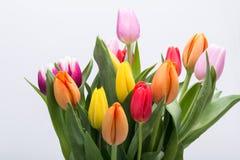 ανθοδεσμών ζωηρόχρωμη τουλίπα άνοιξη λουλουδιών φρέσκια Στοκ εικόνες με δικαίωμα ελεύθερης χρήσης