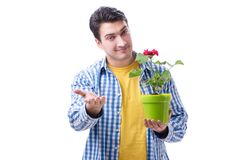 Ανθοκόμος κηπουρών με ένα λουλούδι σε ένα δοχείο που απομονώνεται στο άσπρο backgr Στοκ Εικόνα
