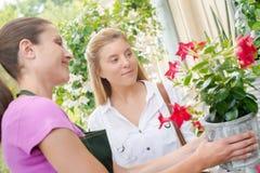 Ανθοκόμος που παρουσιάζει ανθίζοντας φυτό γλαστρών πελατών Στοκ Εικόνα