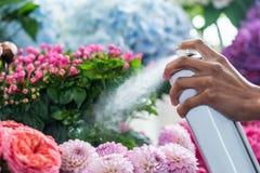 Ανθοκόμος που ψεκάζει τα όμορφα λουλούδια στο ανθοπωλείο Στοκ φωτογραφία με δικαίωμα ελεύθερης χρήσης