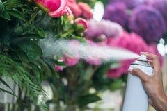 Ανθοκόμος που ψεκάζει τα όμορφα λουλούδια στο ανθοπωλείο Στοκ Εικόνες