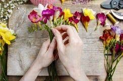 Ανθοκόμος στην εργασία Γυναίκα που κάνει την ανθοδέσμη των λουλουδιών freesia Στοκ Φωτογραφίες