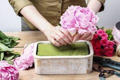 Ανθοκόμος στην εργασία: γυναίκα που κάνει τη floral διακόσμηση των ρόδινων peonies Στοκ Εικόνα