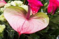 Ανθοδέσμη από τα φρέσκα κόκκινα τριαντάφυλλα και anthurium Στοκ φωτογραφίες με δικαίωμα ελεύθερης χρήσης