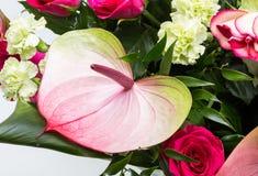 Ανθοδέσμη από τα φρέσκα κόκκινα τριαντάφυλλα και anthurium Στοκ φωτογραφία με δικαίωμα ελεύθερης χρήσης