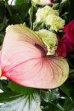 Ανθοδέσμη από τα φρέσκα κόκκινα τριαντάφυλλα και anthurium Στοκ Εικόνα