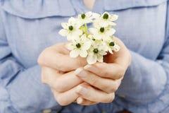 Ανθοδέσμη εκμετάλλευσης γυναικών των μικροσκοπικών άσπρων λουλουδιών (ornithogalum Αραβικά Στοκ Φωτογραφία