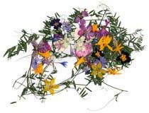 Ανθοδέσμη εφαρμογής των ξηρών λουλουδιών Στοκ Εικόνες