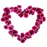 Ανθοδέσμη διαμορφωμένου του βαλεντίνοι σχεδίου ζωηρόχρωμο βασιλικό Pelargo καρδιών Στοκ Εικόνα