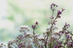 Ανθοδέσμη λουλουδιών και χορταριών Στοκ Εικόνες
