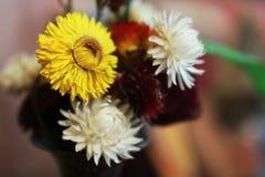 Ανθοδέσμη λουλουδιών ξηρά Στοκ Φωτογραφία