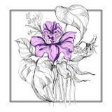 Ανθοδέσμη λουλουδιών σκίτσων στο πλαίσιο Στοκ Φωτογραφίες