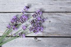 Ανθοδέσμη πορφυρά lavenders Στοκ εικόνα με δικαίωμα ελεύθερης χρήσης