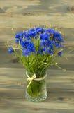 Ανθοδέσμη της Νίκαιας bluebottles Στοκ Φωτογραφία