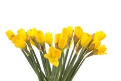 Ανθοδέσμη του κίτρινου παραχωρήσώνταυ κρίνου (daffodil) που απομονώνεται στο λευκό Στοκ εικόνα με δικαίωμα ελεύθερης χρήσης