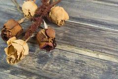 Ανθοδέσμη του ξηρού λουλουδιού με δύο κόκκινα και τρία άσπρα τριαντάφυλλα Στοκ εικόνες με δικαίωμα ελεύθερης χρήσης