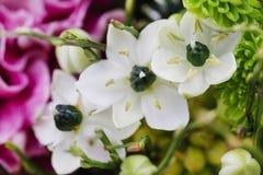 Ανθοδέσμη του ρόδινου γαρίφαλου, αραβικό λουλούδι αστεριών (ara ornithogalum Στοκ Εικόνα