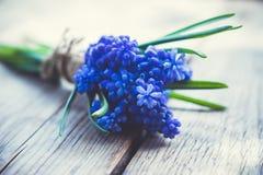 Ανθοδέσμη του armeniacum Muscari (μπλε υάκινθος σταφυλιών) στο αγροτικό ξύλινο υπόβαθρο Στοκ φωτογραφία με δικαίωμα ελεύθερης χρήσης
