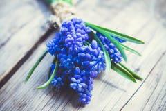 Ανθοδέσμη του armeniacum Muscari (μπλε υάκινθος σταφυλιών) στο αγροτικό ξύλινο υπόβαθρο Στοκ φωτογραφίες με δικαίωμα ελεύθερης χρήσης