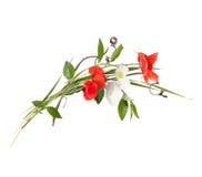 Ανθοδέσμη των άγριων λουλουδιών τομέων, χρώματα Πάσχας, που απομονώνονται στοκ εικόνες με δικαίωμα ελεύθερης χρήσης