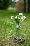 Ανθοδέσμη των άγριων camomile λουλουδιών Στοκ Εικόνες