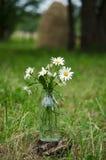 Ανθοδέσμη των άγριων camomile λουλουδιών Στοκ φωτογραφίες με δικαίωμα ελεύθερης χρήσης