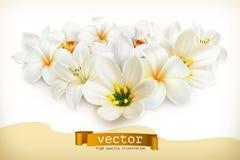 Ανθοδέσμη των άσπρων λουλουδιών ελεύθερη απεικόνιση δικαιώματος