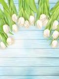 Ανθοδέσμη των άσπρων τουλιπών 10 eps Στοκ εικόνες με δικαίωμα ελεύθερης χρήσης