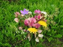 Ανθοδέσμη των ζωηρόχρωμων άγριων λουλουδιών Στοκ Εικόνα