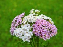 Ανθοδέσμη των ζωηρόχρωμων άγριων λουλουδιών Στοκ φωτογραφία με δικαίωμα ελεύθερης χρήσης