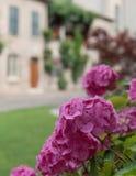Ανθοδέσμη των ζωηρόχρωμων λουλουδιών σε έναν κήπο Ιταλία Στοκ φωτογραφία με δικαίωμα ελεύθερης χρήσης