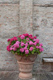Ανθοδέσμη των ζωηρόχρωμων λουλουδιών σε έναν κήπο Ιταλία Στοκ Φωτογραφία