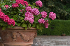 Ανθοδέσμη των ζωηρόχρωμων λουλουδιών σε έναν κήπο Ιταλία Στοκ Φωτογραφίες