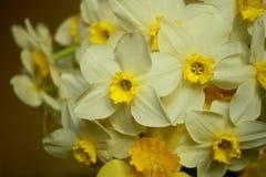 Ανθοδέσμη των κίτρινων ναρκίσσων Στοκ εικόνες με δικαίωμα ελεύθερης χρήσης