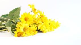 Ανθοδέσμη των κίτρινων λουλουδιών Στοκ εικόνα με δικαίωμα ελεύθερης χρήσης