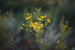 Ανθοδέσμη των κίτρινων λουλουδιών Στοκ φωτογραφίες με δικαίωμα ελεύθερης χρήσης