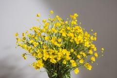 Ανθοδέσμη των κίτρινων buttercaps σε ένα γκρίζο υπόβαθρο Στοκ Εικόνα