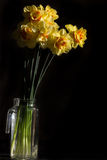 Ανθοδέσμη των κίτρινων daffodils σε μια στάμνα Στοκ Εικόνες
