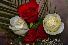 ανθοδέσμη των κόκκινων και άσπρων τριαντάφυλλων Στοκ Φωτογραφία