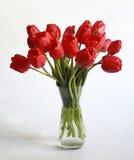 Ανθοδέσμη των κόκκινων τουλιπών στο άσπρο υπόβαθρο Στοκ φωτογραφία με δικαίωμα ελεύθερης χρήσης