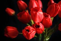 Ανθοδέσμη των κόκκινων τουλιπών στο μαύρο υπόβαθρο Στοκ εικόνες με δικαίωμα ελεύθερης χρήσης
