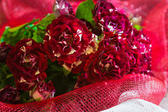 Ανθοδέσμη των μικρών κόκκινων άσπρων τριαντάφυλλων στο κόκκινο υπόβαθρο Στοκ φωτογραφία με δικαίωμα ελεύθερης χρήσης