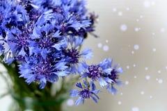 Ανθοδέσμη των μπλε λουλουδιών τομέων των cornflowers Στοκ Εικόνα