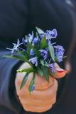 Ανθοδέσμη των μπλε snowdrops υπό εξέταση με το μανικιούρ σε ένα σκούρο μπλε β Στοκ φωτογραφία με δικαίωμα ελεύθερης χρήσης