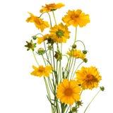 Ανθοδέσμη των λουλουδιών μαργαριτών, χρώματα Πάσχας, που απομονώνονται στοκ φωτογραφία
